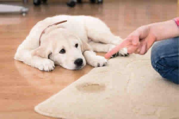 Como manter a higiene em uma casa com animais?